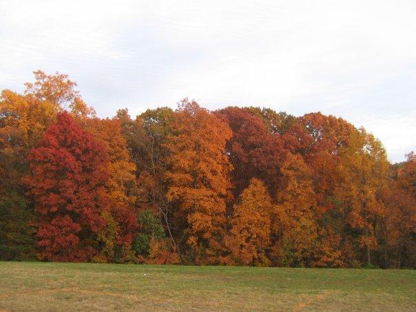 Autumn in Woodbridge.jpg