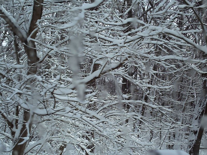 snowmegeddon2010.jpg