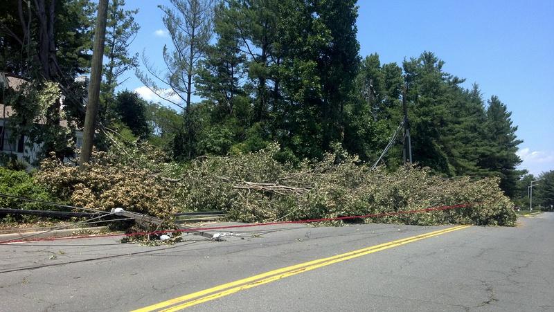 tree down 4.jpg