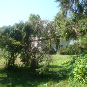 june 2012 and storm damage 063.JPG