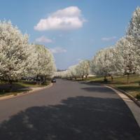 Spring in Ashburn, VA, 2012