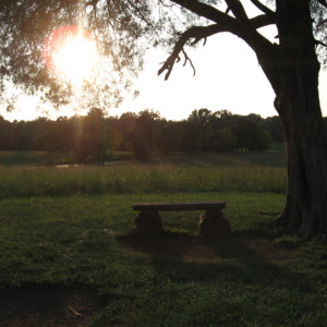 picnic 152.jpg