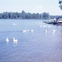 Burke Lake Park, Fairfax, Virginia