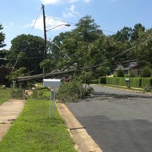 tree down 2.jpg
